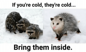 Cold, Them, and Inside: If you're cold, they're cold...  Bring them inside.
