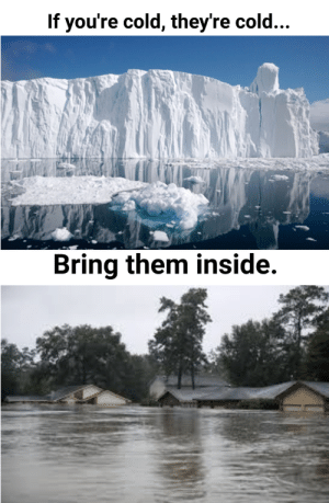 (Sp)icy meme by vanquar8 FOLLOW 4 MORE MEMES.: If you're cold, they're cold...  Bring them inside. (Sp)icy meme by vanquar8 FOLLOW 4 MORE MEMES.