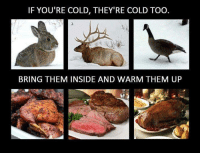 Hungry, Ups, and Dank Memes: IF YOU'RE COLD, THEY'RE COLD TOO.  BRING THEM INSIDE AND WARM THEM UP Im suddenly hungry