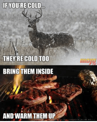 Memes, Ups, and Cold: IF YOU'RE COLD  THEY'RE COLD TOO  BRING THEMINSIDE  AND WARM THEM UP Lol.