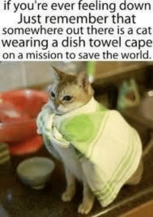 Dish, World, and Cat: if you're everfeeling down  Just remember that  somewhere out there is a cat  wearing a dish towel cape  on a mission to save the world go dish cat!
