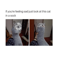 yall im out of videos to post so send me funny videos in my dm and i might post them.: If you're feeling sad just look at this cat  in a sock yall im out of videos to post so send me funny videos in my dm and i might post them.