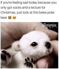 Omg @thegingerjew_: If you're feeling sad today because you  only got socks and a lecture for  Christmas, just look at this bebe polar  bear Omg @thegingerjew_