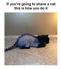 Dank, 🤖, and Cat: If you're going to shave a cat  this is how you do it Dino Cat