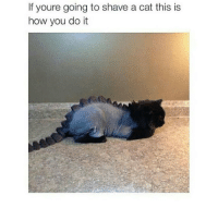 Cats, Relatable, and How: If youre going to shave a cat this is  how you do it omfg