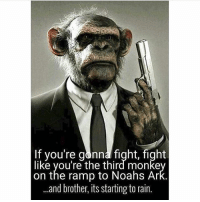 merica america usa: If you're gonna fight, fight  like you're the third monke  on the ramp to Noahs Ar  ..and brother, its starting to rain. merica america usa