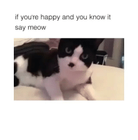 @ifunnymeme.tv is lit: if you're happy and you know it  say meoW @ifunnymeme.tv is lit
