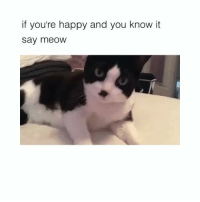 This makes me happy and I know it (@hilarious.ted): if you're happy and you know it  say meOW This makes me happy and I know it (@hilarious.ted)