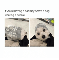 Bad Day, Funny, and If Your Having a Bad Day: if you're having a bad day here's a dog  wearing a beanie I want it ! @hardcorecomedy2.0