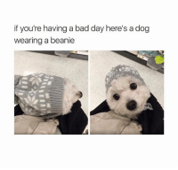 Bad Day, Memes, and 🤖: if you're having a bad day here's a dog  wearing a beanie Tag someone who needs to see this. ❤