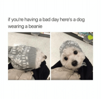 Bad Day, Funny, and Butterfly: if you're having a bad day here's a dog  wearing a beanie @x__antisocial_butterfly__x is hilarious