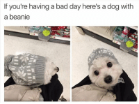 Bad Day, Memes, and 🤖: If you're having a bad day here's a dogwith  a beanie tag someone - ur friends
