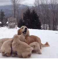 If you're having a bad day, here's a mother dog playing with her pups  https://t.co/5YH2qJcfb0: If you're having a bad day, here's a mother dog playing with her pups  https://t.co/5YH2qJcfb0