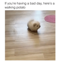 Bad, Bad Day, and Memes: If you're having a bad day, here's a  walking potato wtf is this! 😂 👉🏻(@bestvines bestvines)