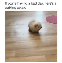 Bad, Bad Day, and Latinos: If you're having a bad day, here's a  walking potato Lmaoo 😊😊😊😂😂😂 🔥 Follow Us 👉 @latinoswithattitude 🔥 latinosbelike latinasbelike latinoproblems mexicansbelike mexican mexicanproblems hispanicsbelike hispanic hispanicproblems latina latinas latino latinos hispanicsbelike