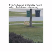 Jiggle jiggle: if you're having a bad day, here's  video of a fat ass cat running Jiggle jiggle
