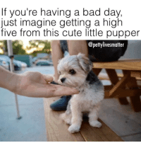 Omg I'm in love 😩🙌 tag a friend who loves puppies and follow me @pettylivesmatter @pettylivesmatter pettylivesmatteroriginal 🙌🙌🙌: If you're having a bad day,  just imagine getting a high  five from this cute little pupper  @pettylivesmatter Omg I'm in love 😩🙌 tag a friend who loves puppies and follow me @pettylivesmatter @pettylivesmatter pettylivesmatteroriginal 🙌🙌🙌