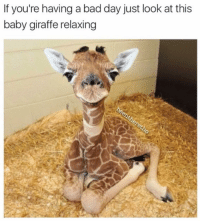I can confidently say that this is the first time I have ever seen a baby giraffe and I don't know how I lived before today HE IS SO DAMN CUTE (@beentheretho): If you're having a bad day just look at this  baby giraffe relaxing I can confidently say that this is the first time I have ever seen a baby giraffe and I don't know how I lived before today HE IS SO DAMN CUTE (@beentheretho)