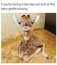 Tag someone to cheer them up on a Monday 😃: If you're having a bad day just look at this  baby giraffe relaxing Tag someone to cheer them up on a Monday 😃