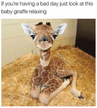 Giraffity: If you're having a bad day just look at this  baby giraffe relaxing