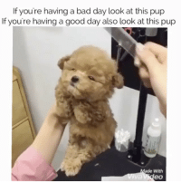 Tag a friend: If you're having a bad day look at this pup  If you're having a good day also look at this pup  ade With  eo Tag a friend