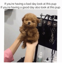 Tag a dog lover and Fit Tea Wraps bro they $14.99 today only!: If you're having a bad day look at this pup  If you're having a good day also look at this pup  Vi Tag a dog lover and Fit Tea Wraps bro they $14.99 today only!