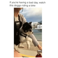 Bad, Bad Day, and Memes: If you're having a bad day, watch  this doggo riding a bike