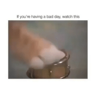 "Bad, Bad Day, and Confused: If you're having a bad day, watch this i love this but i h8 being lactose intolerant im limited to life i cri also i went into my brothers bathroom and i saw a fidget spinner ""homemade"" but i didnt see it had glue around it so i was really confused ~adeezha (@adeezhaa @kms.kiwi) - tags: tumblrtextpost tumblrposts textpost tumblr shrek instatumblr memes posts phan funnythings 😂 same funny haha loltumblr lol relatable rarepepe funnythings funnytextposts pepeislife meme funnystuff pepe food spam"