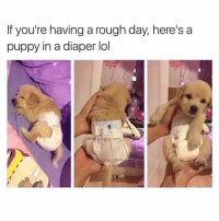 Memes, Rough, and 🤖: If you're having a rough day, here's a  puppy in a diaper lol Ugh... ❤️ @spacepee