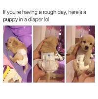 Memes, Puppies, and Cool: If you're having a rough day, here's a  puppy in a diaper lol Not having a ruff day but I'm cool with this. ( @bustle )