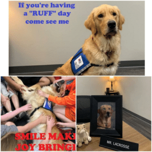 "doggos-with-jobs:  Mr. Lacrosse takes his job as school therapy dog very serious: If you're having  a ""RUFF"" day  come see me  Hils  SMILE MAK  Y BRINGI  MR. LACROSSE doggos-with-jobs:  Mr. Lacrosse takes his job as school therapy dog very serious"