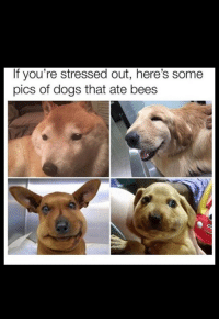 stressed out: If you're stressed out, here's some  pics of dogs that ate bees