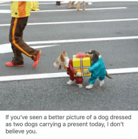 This makes me so happy.: If you've seen a better picture of a dog dressed  as two dogs carrying a present today, I don't  believe you This makes me so happy.