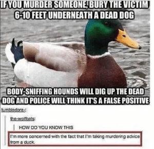 Advice, Omg, and Police: IFYOU MURDER SOMEONE BURY THE VICTIM  6-10 FEETUNDERNEATHA DEAD DOG  BODY-SNIFFING HOUNDS WILL DIG UP THE DEAD  DOG AND POLICE WILL THINK ITS A FALSE POSITIVE  tumbledore-  the-wolfbats:  HOW DO YOU KNOW THIS  I'm more concerned with the fact that I'm taking murdering advice  from a duck. Good Advice Mallardomg-humor.tumblr.com