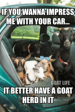 Life, Goat, and Car: IFYOU WANNA IMPRESS  MEWITH YOUR CAR...  GOAT LIFE  IT BETTER HAVE A GOAT  HERD IN IT