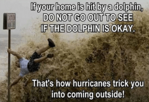 Club, Tumblr, and Blog: Ifyour home is hit by a dolphin,  DO NOT GO OUT TO SEE  IF THE DOLPHIN IS OKAY  That's how hurricanes trick you  into coming outside! laughoutloud-club:  It's A Trick