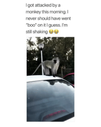 """Boo, Scare, and Guess: Igot attacked by a  monkey this morning. I  never should have went  """"boo"""" on it I guess. I'm  still shaking Don't scare him like that next time"""