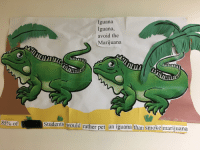 Marijuana: Iguana  Iguana,  avoid the  Marijuana  AL  85% of  Students would rather pet an iguana lthan smoke marijuana