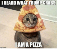 For more cute pics LIKE us at The Purrfect Feline Page: IHEARD WHAT TRUMP GRABS  AMA PILA For more cute pics LIKE us at The Purrfect Feline Page