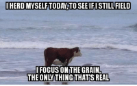 Focus, Cow, and Real: IHERD MYSELFTODAY TO SEE IFI STILLFIELD  FOCUS ON THE GRAIN  THE ONLY THINGTHAT'S REAL Something something cow pun