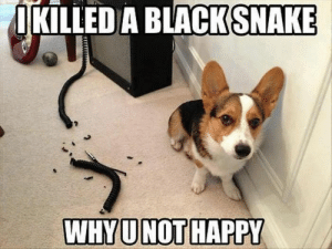 Animals, Dogs, and Memes: IKILLED A BLACK  SNAKE Dog Memes Of The Day 32 Pics – Ep28 #dogs #dogmemes #memes#lovelyanimalsworld - Lovely Animals World