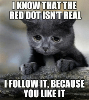 Confession Cat: IKNOW THAT THE  RED DOT ISN'T REAL  I FOLLOW IT, BECAUSE  YOU LIKE IT Confession Cat