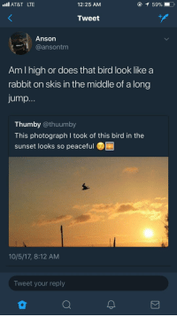 <p>He ain't the only one (via /r/BlackPeopleTwitter)</p>: Il AT&T LTE  12:25 AM  Tweet  Anson  @ansontm  Am I high or does that bird look like a  rabbit on skis in the middle of a long  jump.  Thumby @thuumby  This photograph I took of this bird in the  sunset looks so peaceful  10/5/17, 8:12 AM  Tweet your reply <p>He ain't the only one (via /r/BlackPeopleTwitter)</p>