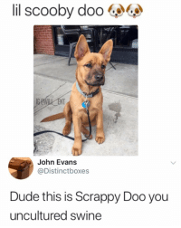 Dude, Memes, and Scooby Doo: il  scooby  doo  NT  John Evans  @Distinctboxes  Dude this is Scrappy Doo you  uncultured swine 😂Uncultured swine get it right, he is called Scrappy