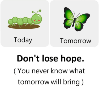 Memes, Today, and Tomorrow: IL  Today  Tomorrow  Don't lose hope.  (You never know what  tomorrow will bring) https://t.co/wr4K6k4tTs
