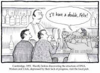 watson and crick: ( I'll have a double, Felix!  CARTOONSTOC  com  ID2  Cambridge, 1953. Shortly before discovering the structure of DNA,  Watson and Crick, depressed by their lack of progress, visit the local pub.