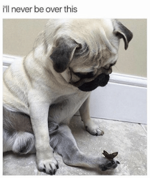 Animals, Dogs, and Memes: i'll never be over this Dog Memes Of The Day 32 Pics – Ep40 #dogs #dogmemes #lovelyanimalsworld - Lovely Animals World