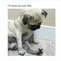 Pugs are so damn adorable: I'll never be over this Pugs are so damn adorable