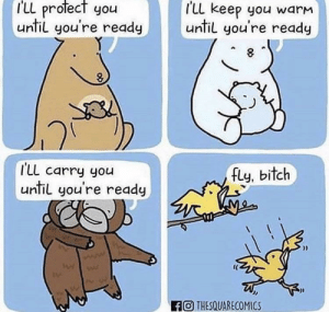 Why are birds so brutal?: I'LL profect you  I'LL keep you warm  until you're ready  until you're ready  I'Ll carry you  until you're ready  fly, bitch  wae  FO THESQUARECOMICS Why are birds so brutal?