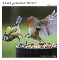 """Funny, Instagram, and Best: """"I'll see you in hell Murray!""""  @tank.sinatra  MADE WITH MOMUSs @masipopal is the best kept secret on Instagram"""